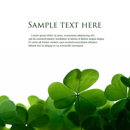 four leaf clovers: Green clover leafs border with space for text. Stock Photo