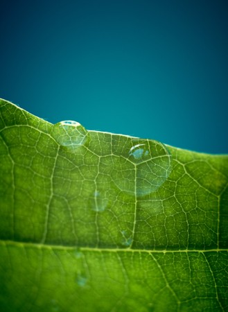 Green oak leaf with water drops. Shallow DOF. With space for text. Stock Photo - 7389614