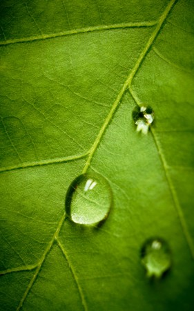 oak eaf and drop, shallow dof Stock Photo - 7389642
