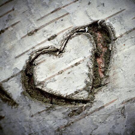 """A gesneden """"Hart van liefde"""" op een witte berk boom. Ondiepe DOF."""