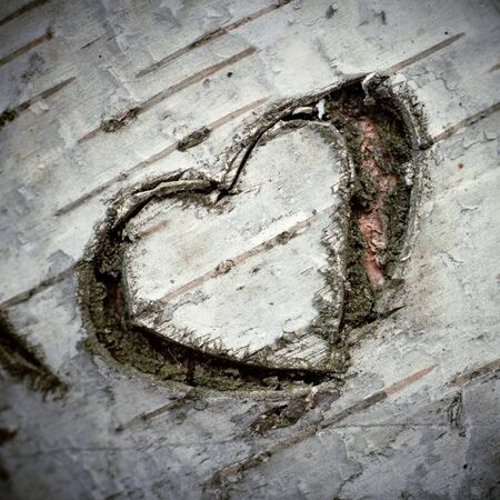 bark background: A Carved Heart of Love on a White Birch Tree. Shallow DOF.
