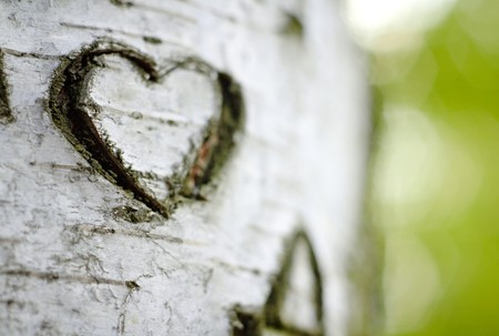 bark: A Carved Love Heart on a Birch Tree