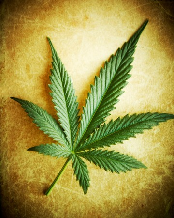 Cannabis leaf on grunge background, shallow DOF. photo