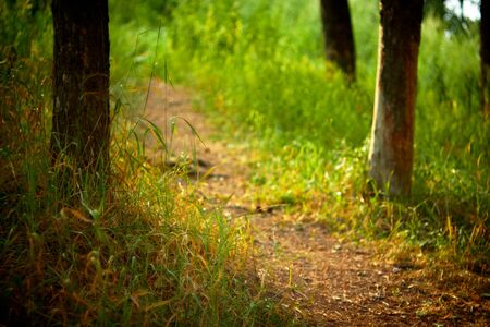 Forest path at sunset. Shallow DOF. photo