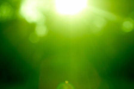 Abstract green forest defocused with sunbeam Stock Photo - 8014815