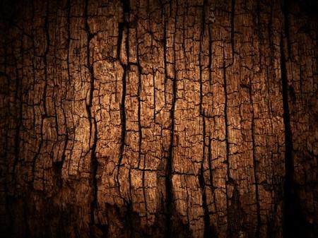 deforestation: Old wood cracked texture
