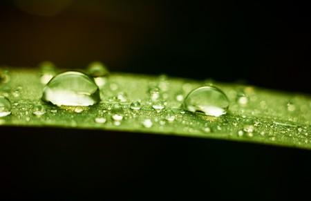 Rain drops on grass leaf at autumn season photo