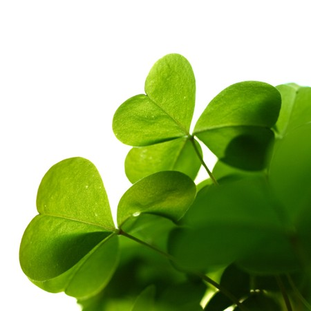 Clover plant macro shot, isolated on white background, corner composition. Stock Photo - 8084525