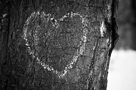 Hart op boomboomstam, zwart-wit beeld wordt getrokken dat.