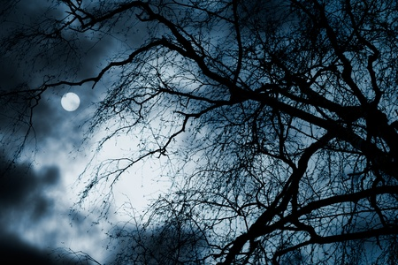 Scary dark scenery with naked trees, full moon and clouds Stock Photo - 9090263
