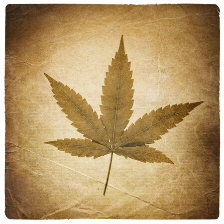 Cannabis leaf. Vintage background with torn edges. Isolated on white photo