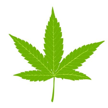 Cannabisblad. Volledig uitvoerbaar door lagen, vector (eps8). Stock Illustratie