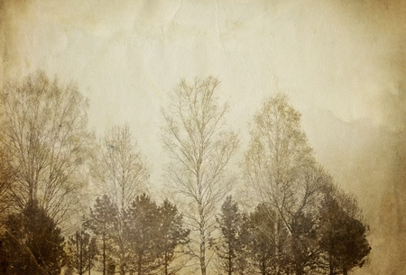 Trees on vintage paper sheet. photo
