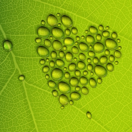 passion ecology: Heart shape dew drops on green leaf.