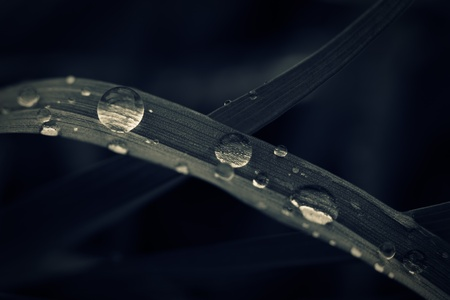 Water drops on grass, toned macro shot. Stock Photo - 19185747