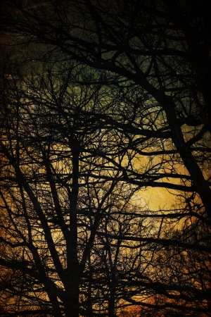 Spooky trees silhouettes. Vintage background photo