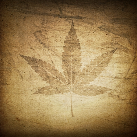 marijuana leaf: Cannabis leaf grunge background