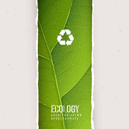 paper recycle: Green leaf texture under torn paper with recycling symbol. Vector, EPS10