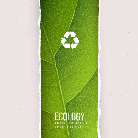reciclaje papel: Textura de la hoja verde bajo el papel rasgado con el s�mbolo de reciclaje. Vector, EPS10 Vectores