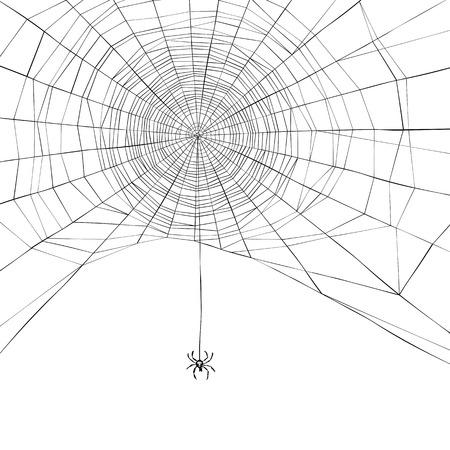 halloween spider: Halloween background. Spider web. Vector illustration