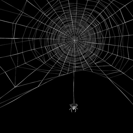 Halloween background. Spider web. Vector illustration