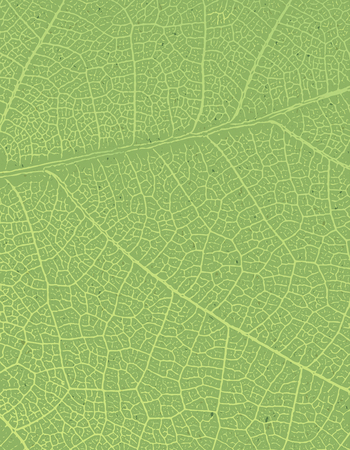 recycled paper texture: Nature background with free space for text or image. Green leaf veins texture on the toned recycled paper texture. Illustration