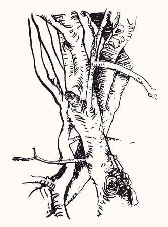 Alder tree trunk. TYree trunk sketch. Nature background