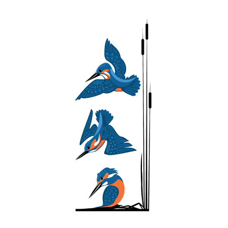three blue kingfishers vector illustration isolated on white background.