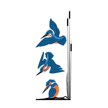 three blue kingfishers vector illustration isolated on white background.
