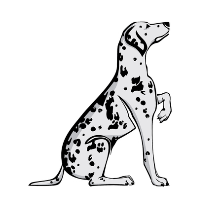 Sitting Dalmatian dog with raised paw