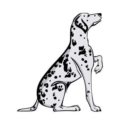 Sitting Dalmatian dog with raised paw