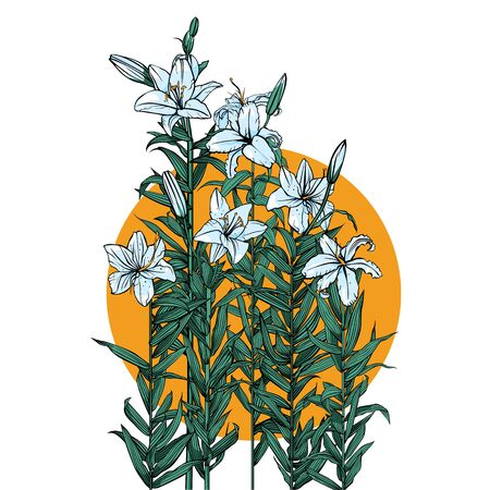 A few lilies in the sun illustration.