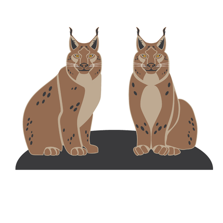 Two lynx on white background, vector illustration.