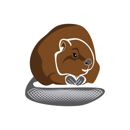 Vector isolated illustration of a brown beaver
