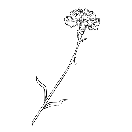Carnation flower on a long stem. Vector graphic monochrome isolated image.