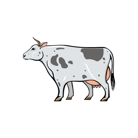 Cow with spots, farm animal line icon. Vector stylized isolated color image.  イラスト・ベクター素材