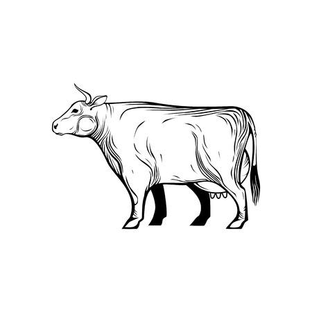 Cow, farm animal line icon. Vector graphic monochrome isolated image.