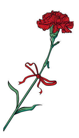 Red carnation flower tied with a red bow with ribbons. Vector illustration.