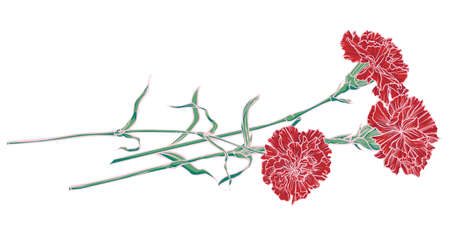 Three red carnations lying down. Vector color realistic image. 矢量图像