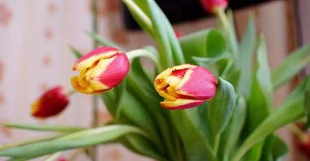 untitled key: Spring Tulips