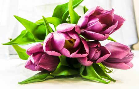 Purple tulips bouquet background Stock Photo - 18814797