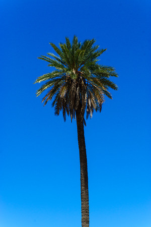 Palm tree in blue sky photo