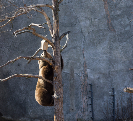 Bear on tree Stock Photo