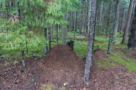 under a tree: anthill under a tree