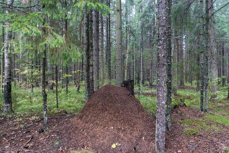 anthill: anthill under a tree