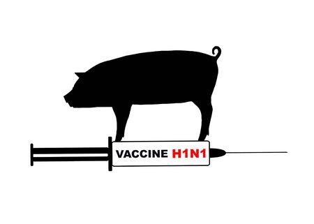 Swine flu photo