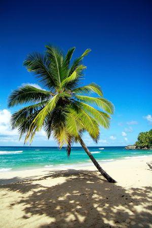 Palm on beautiful beach photo