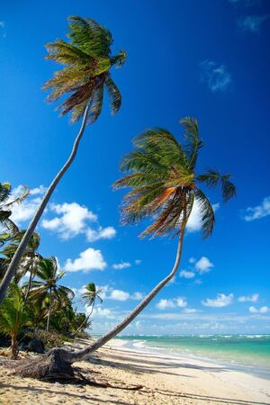 Two palms on caribbean beach
