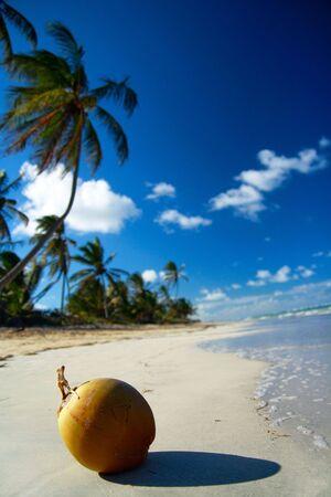 Fresh oconut on beach  Stock Photo