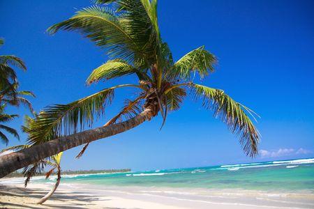 republic of dominican: Palm on caribbean beach, Dominican Republic